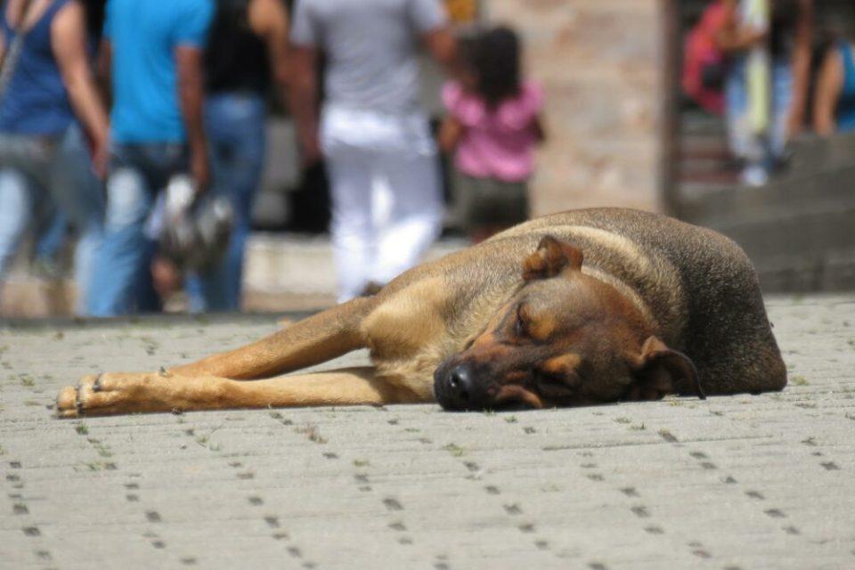 Adoptar un perro maltratado