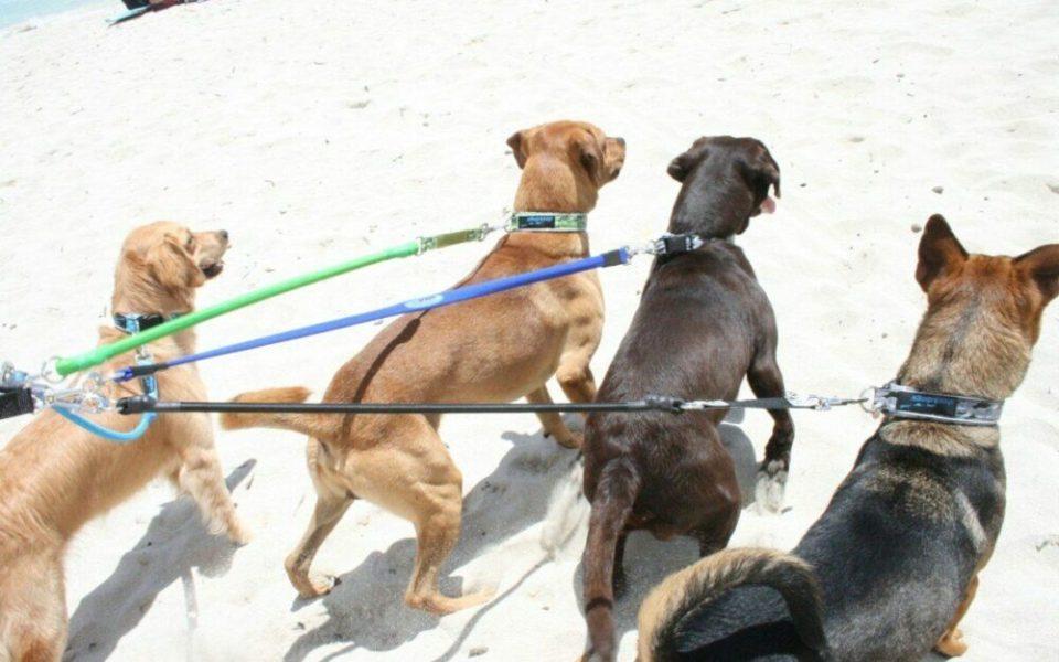 accesorios imprescindibles para perros