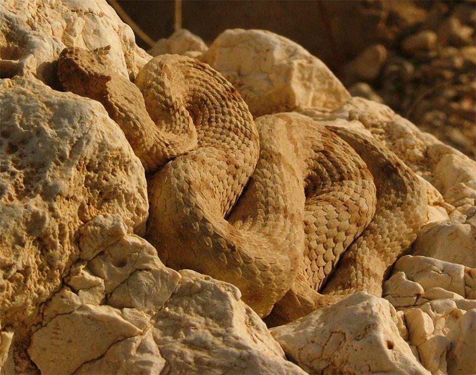 Las serpientes y reptiles son unos maestros del mimetismo y el camuflaje