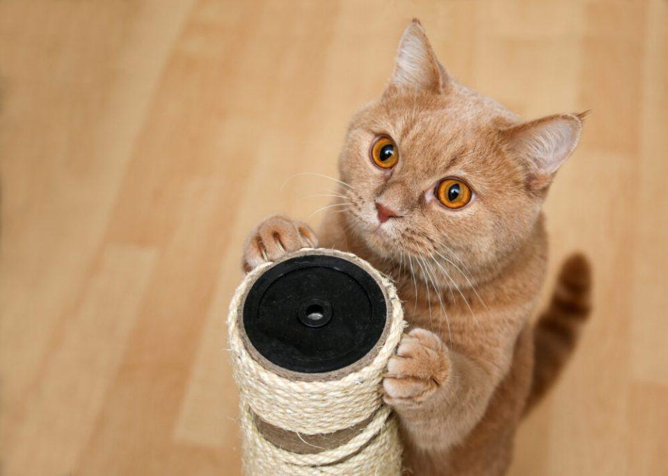 enseñar a un gato a utilizar el rascador