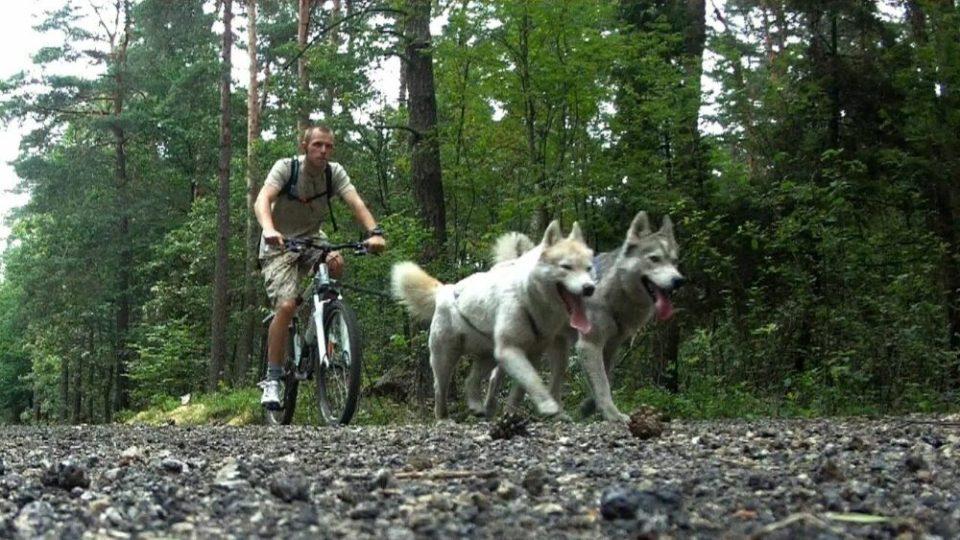 Modalidades bikejoring