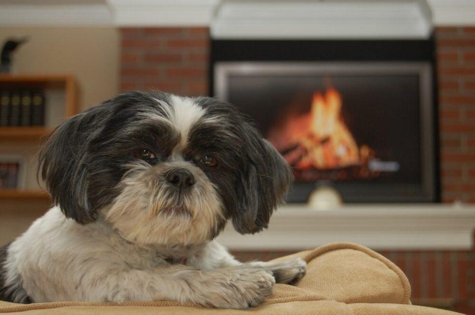 razas de perros más tranquilos para tener en un piso