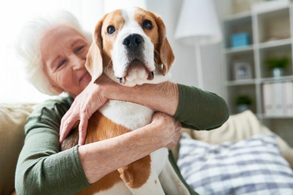 Consejos y cuidados para solteros que quieren tener perro