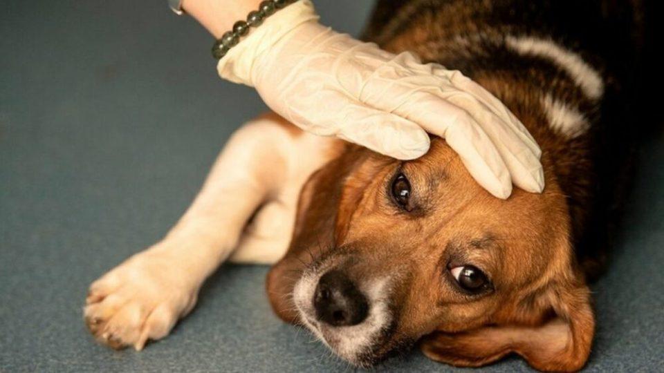 Tratamiento lombrices en animales