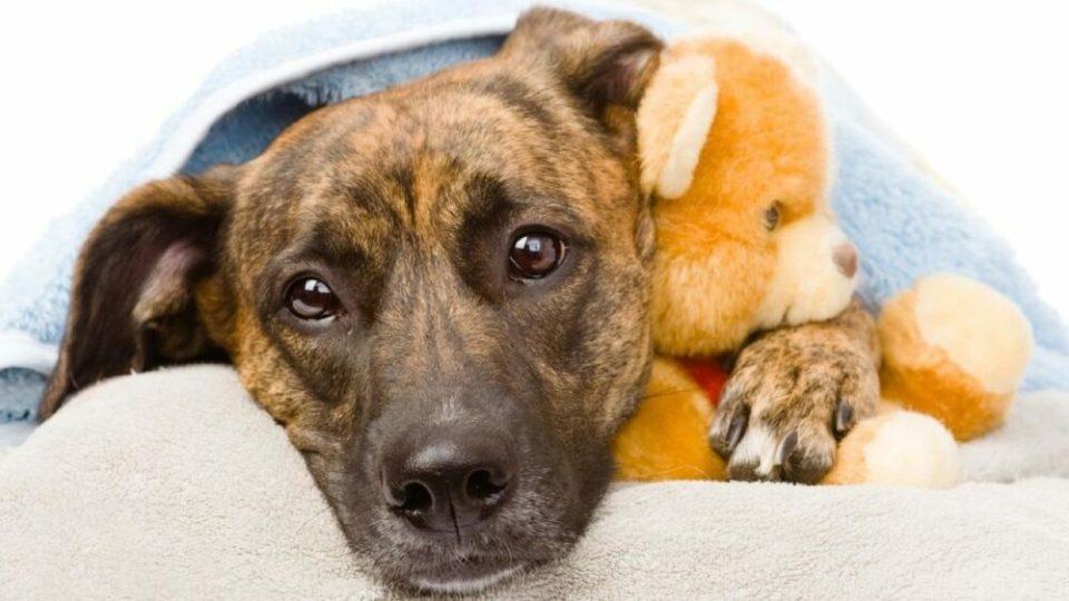 cuidados básicos perros con lombrices