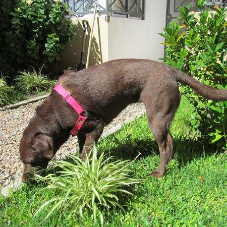 Arnes Pretal anti tirones para perros. Halti anti tirones perros