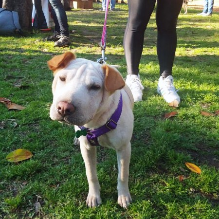 Arnes H para perros anti escape seguro y reforzado