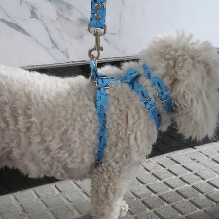 Collar estampado para perros diferentes diseños