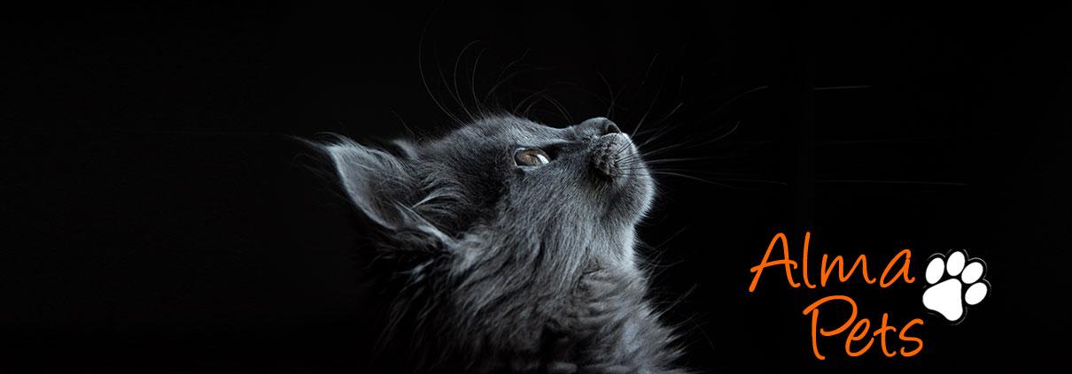 Arnes y correa larga para gatos. Pretales seguros para gatos