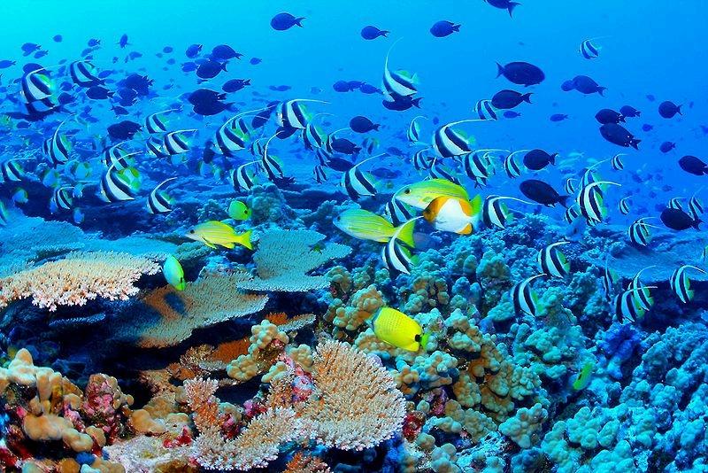 Marine ecosystem near Hawaii, U.S. NOAA