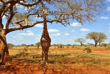 On the International Day for Biological Diversity UNWTO announces a training on tourism and biodiversity in West and Central Africa