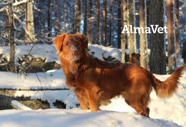 Tervetuloa AlmaVetiin!