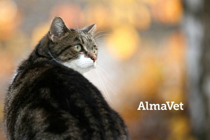 AlmaVetin leikkauskampanja