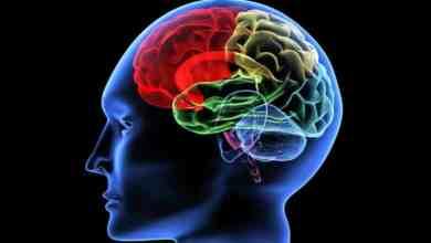 صورة كيفية زيادة تدفق الدم إلى الدماغ