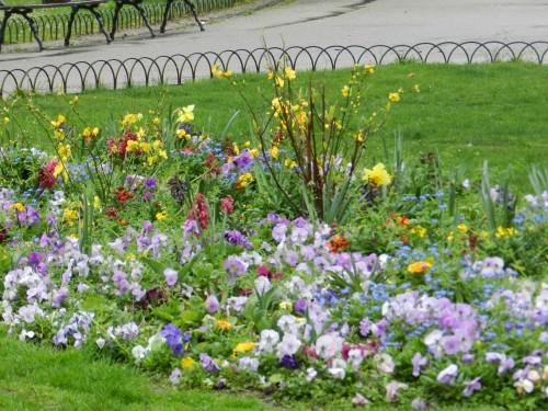 Full bloom at the Jardin
