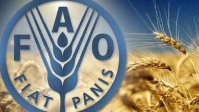 Photo of الفاو: الطلب العالمي على الإنتاج الزراعي سيرتفع خلال العقد القادم