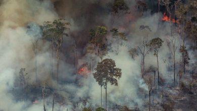Photo of رئة الأرض في خطر .. غابات الأمازون تحترق من جديد