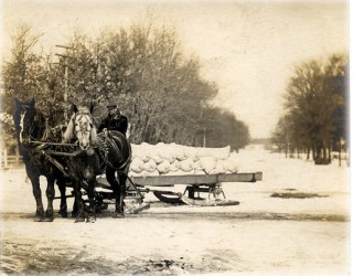 Horses and Sleigh- Could be Potatoes