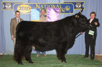 2010 Grand Champion Bull  Koal