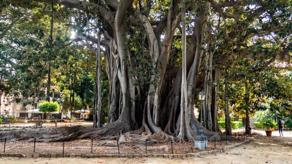 Banyan trees in Giardino Garibaldi in Palermo, Sicily | 48 Hours in Palermo, Sicily Travel Guide