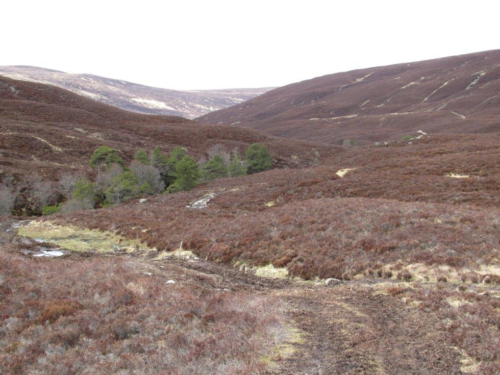 Glen Feshie in Scotland