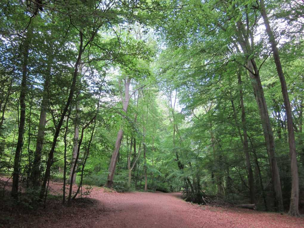 Burnham Beeches in Buckinghamshire, England