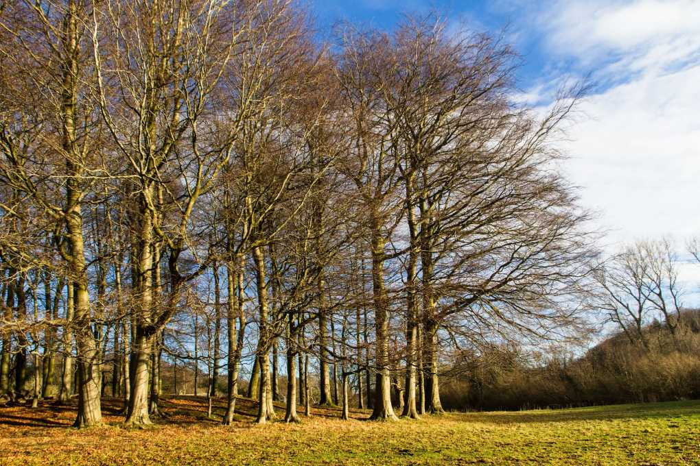 Pollok Country Park in Glasgow, Scotland