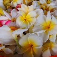 Balinese Ritual and Ceremony. Flowers and Farewell