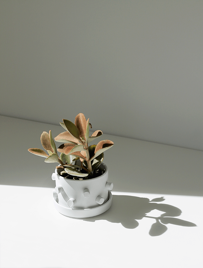 DIY 3D Planter | almost makes perfect