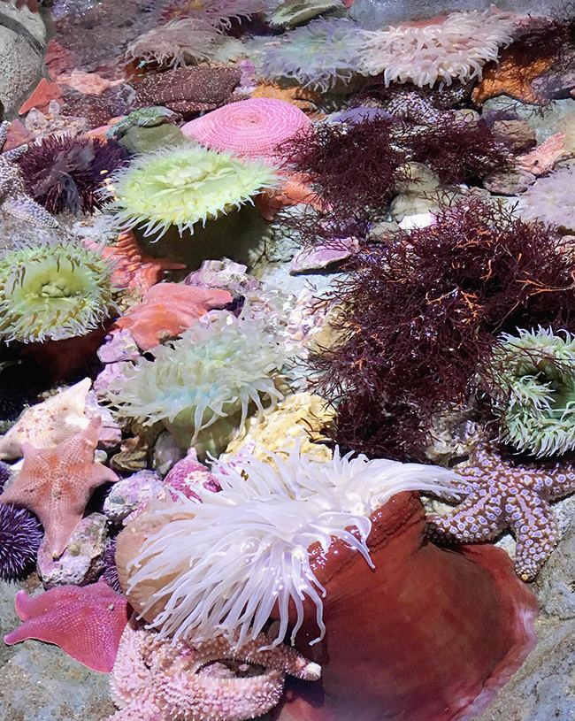 aquarium of the pacific in long beach   almost makes perfect