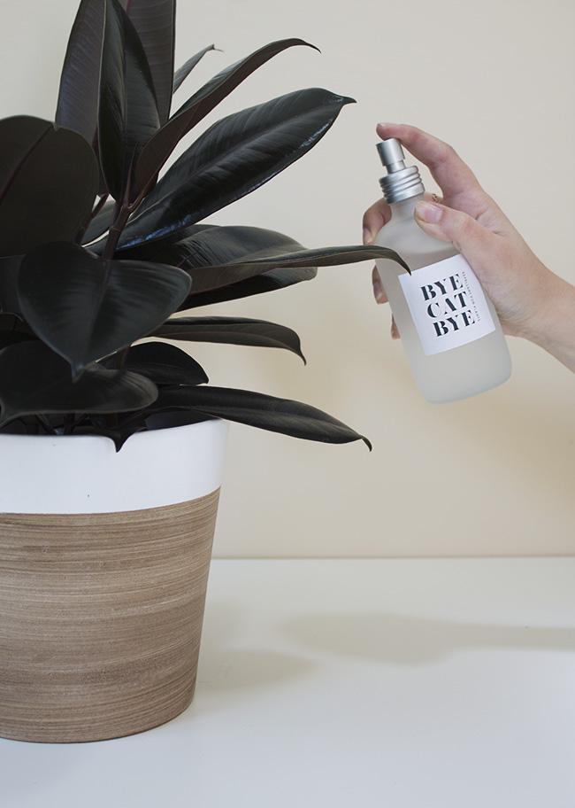 DIY cat repellant spray | almost makes perfect