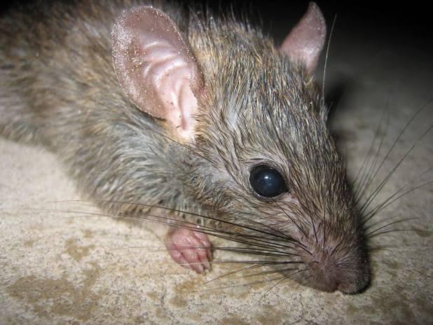 افضل شركة مكافحة الفئران بالرياض