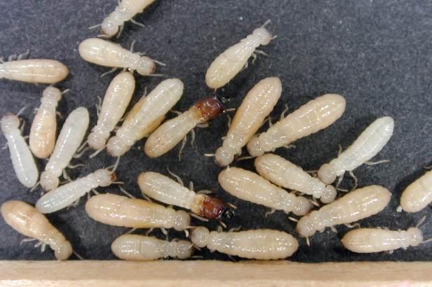 مكافحه النمل الابيض بتبوك