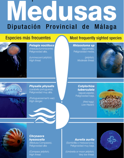 commonly_sighted_jellyfish_on_Malaga_coast