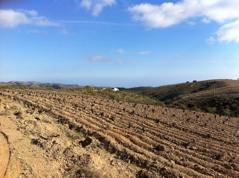 "This is Europes highest planted vineyard, Pago Cerro Las Monjas, at the altitude 1368 meters above sea level. Barranco Oscuro has one wine from this vineyard called ""1368""."