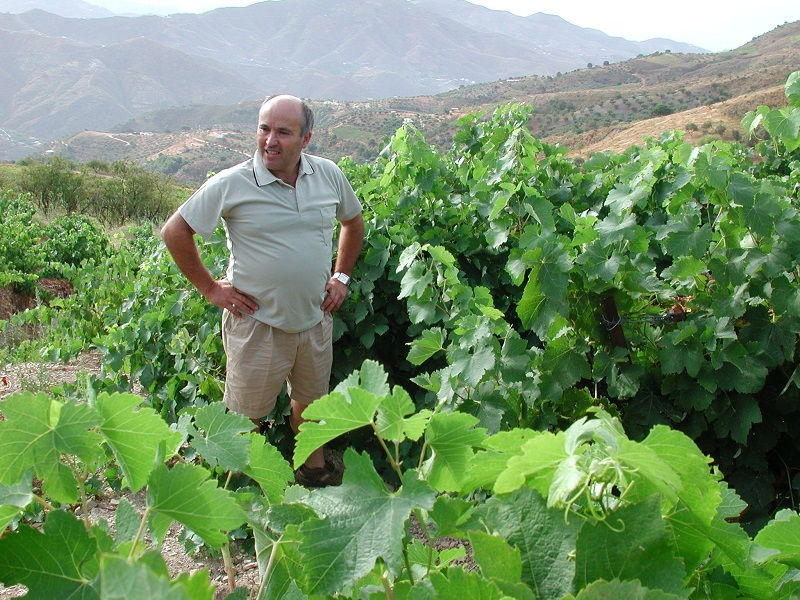 The man himself, Horacio Calvente Almendras, in the vineyard with old Moscatel plants that gives the grapes to his famous white wine La Guindalera Blanco.