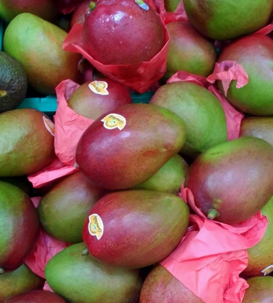 Ah the Spanish Mango!  The majority of the Spanish mango producers are based in Malaga (the region of the Axarquía), as well as in the Costa Tropical of Granada.