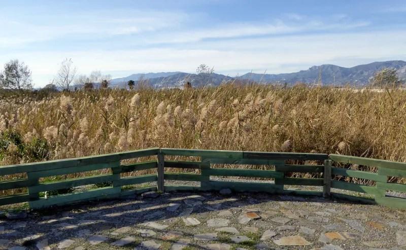 Wetlands In The Vega Of Motril