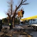 La renovació de l'entrada del cementeri, tasca destacada de manteniment aquesta setmana a Almussafes
