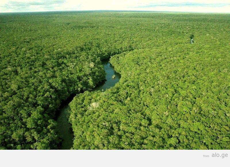 Amazonas01