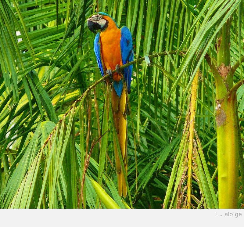 Amazonas16