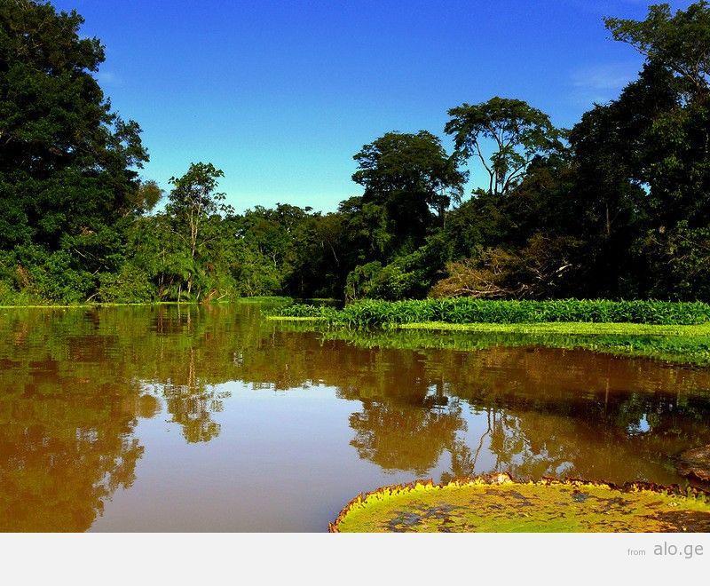 Amazonas17