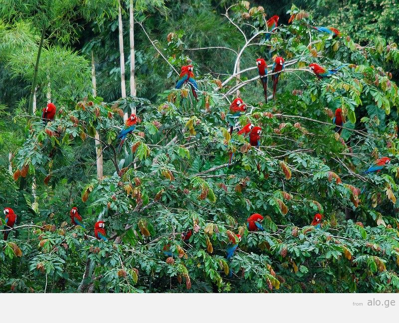 Amazonas30