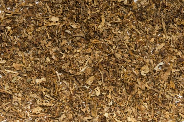 tabac plante médécinale