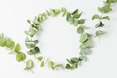 eucalyptus pour soulager les douleurs musculaires