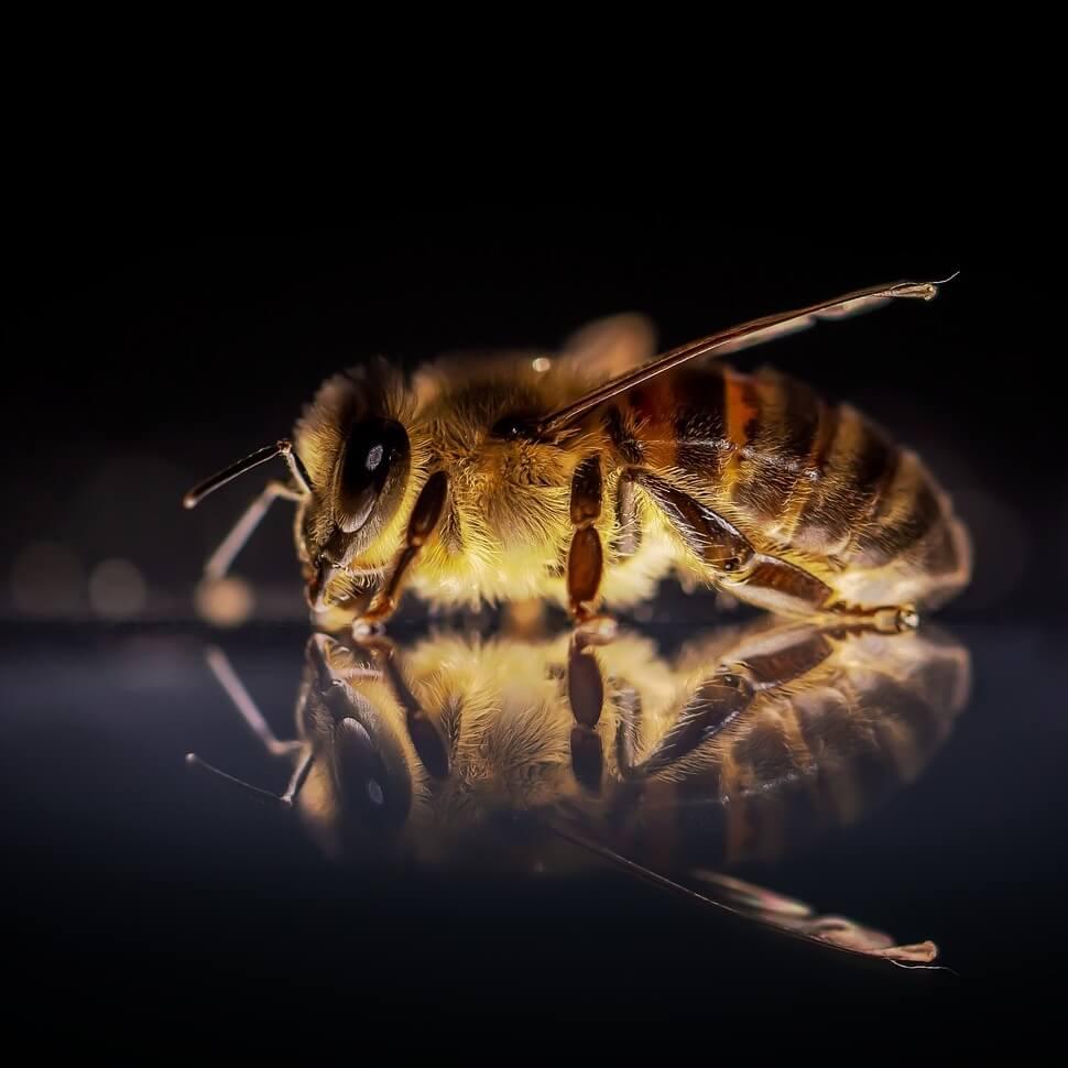 pčela - najava kategorije Pčelinji proizvodi
