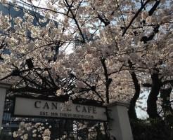 神楽坂エリアのカフェ(カナルカフェ)桜