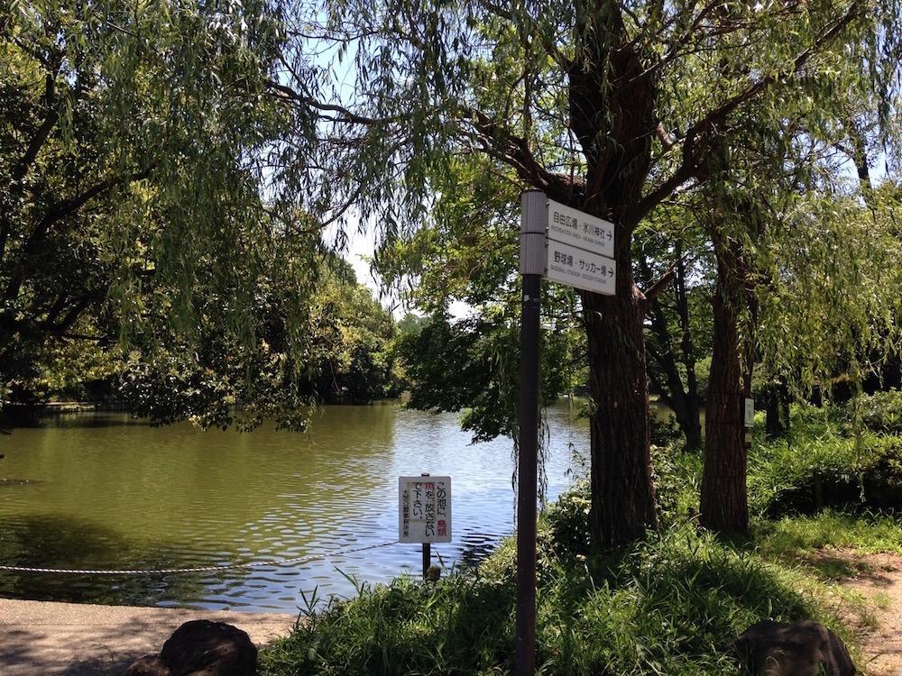 大宮公園(池)