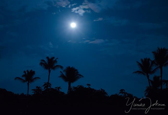 月夜とパームツリー