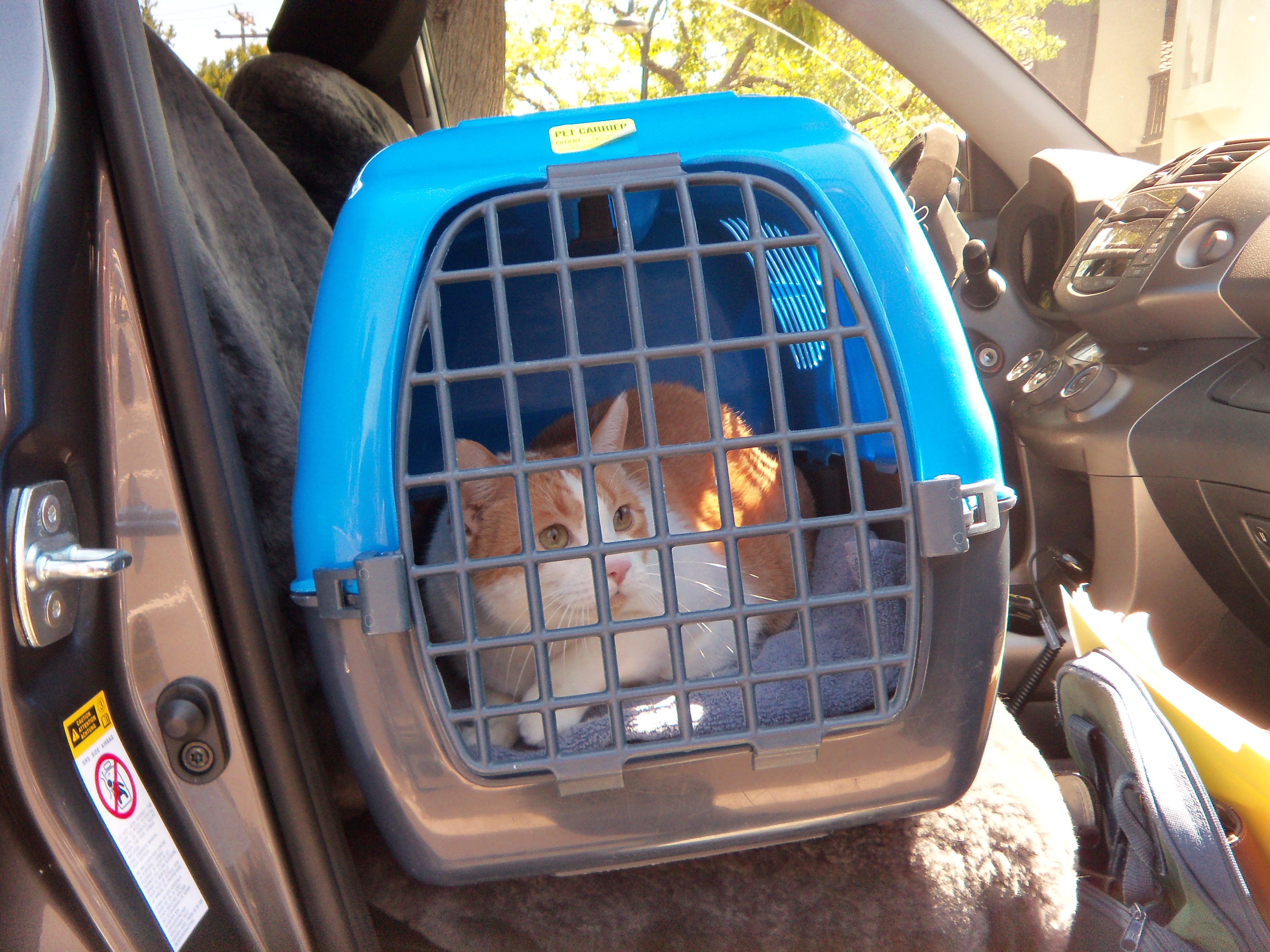 Zuca- Pet Taxi